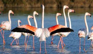 birdwatching delta del po fenicotteri